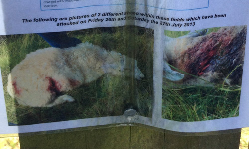 Victims: part of a poster nailed to a post on a farm near Winchelsea