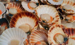 Scallop week starts here and now