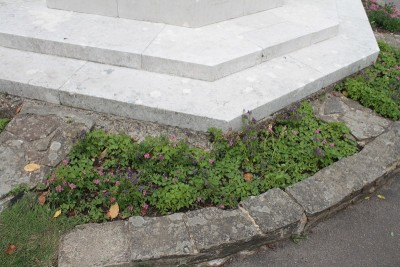 """Scrappy"" plants round war memorial's base"
