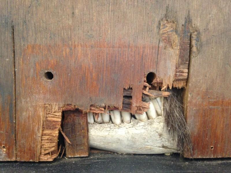Tooth Hairy by Matt Hardman - detail