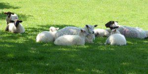 Could lamb fill rice bowls?