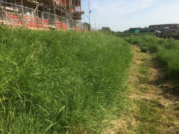Riverside path approved